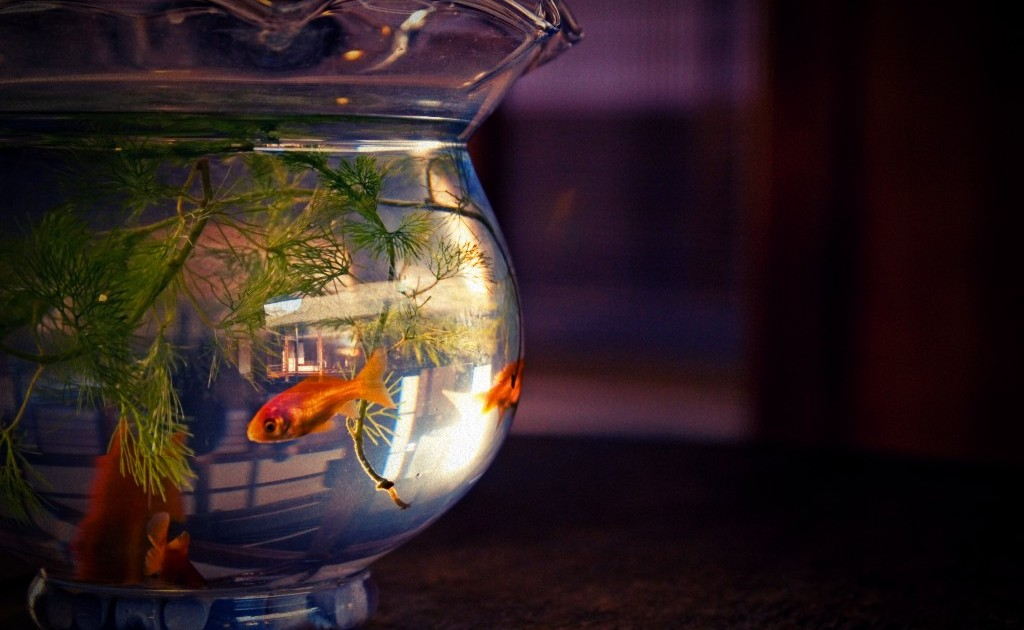Fish in a fishbowl
