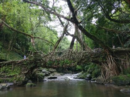 Ancient_Root_Bridge,_Mawlynnong,_Meghalaya,_India